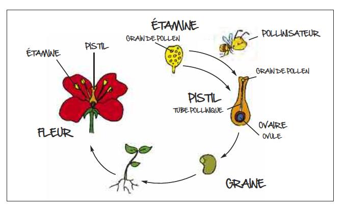 La ferme apicole de dieval - Comment se debarrasser des abeilles dans une cheminee ...